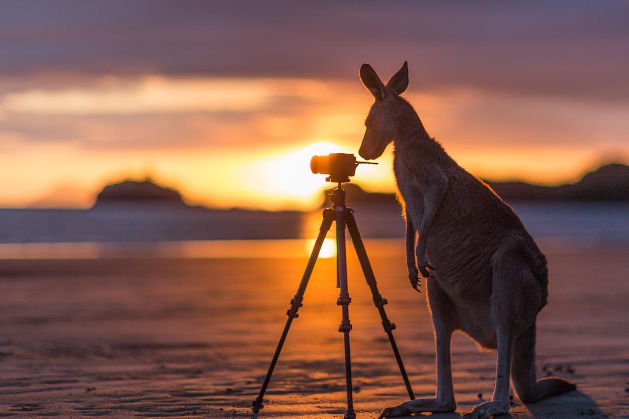 Làm visa Úc có dễ không